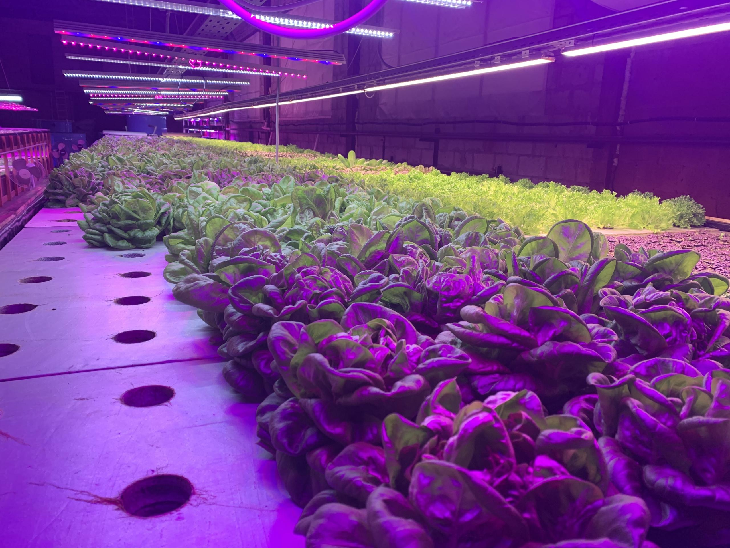 Наш новый продукт – АКВА-салат!»