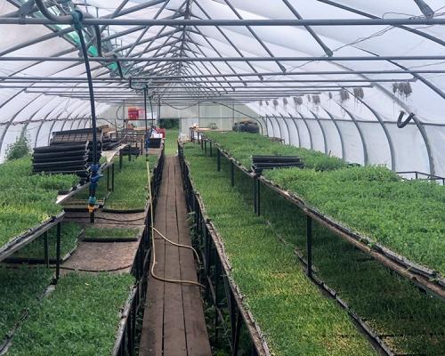 тепличное ростковое хозяйство 1